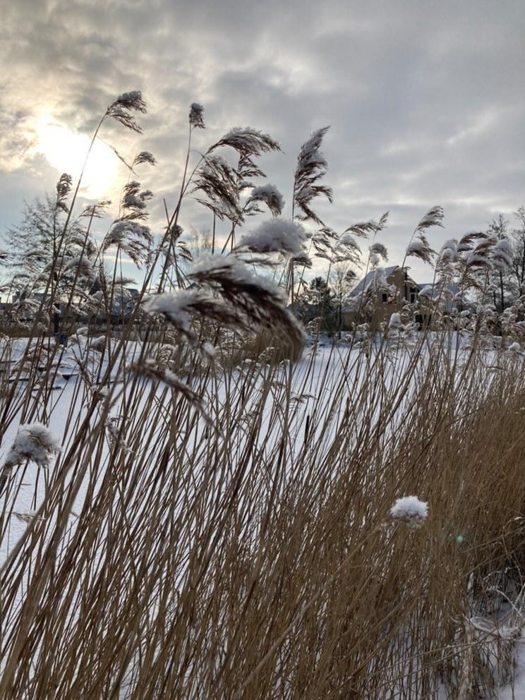 Winterfotowedstrijd - album 2